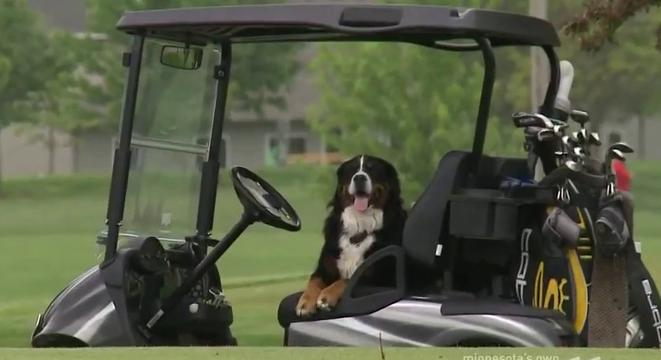 dog in golf cart